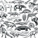 CNP013_SkratchFossils-12_